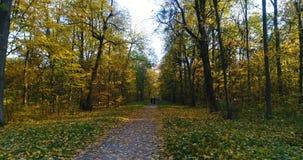 outono aéreo do parque filme