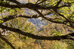 Outono adiantado Imagens de Stock Royalty Free