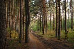 outono adiantado da floresta bonita e quieta fotografia de stock