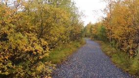 outono adiantado no norte video estoque
