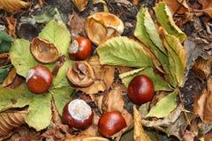 Outono ainda vivo Imagens de Stock Royalty Free