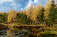 outono amarelo no rio Imagens de Stock Royalty Free