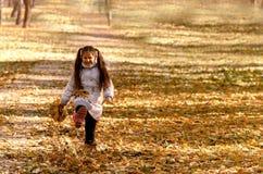 Outono ao ar livre Fotos de Stock Royalty Free