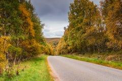 outono ao longo da estrada da neve Imagem de Stock Royalty Free