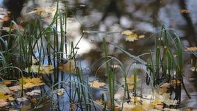 outono, as folhas coloridas flutuam na água filme