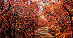 Outono atrasado. Foto de Stock Royalty Free