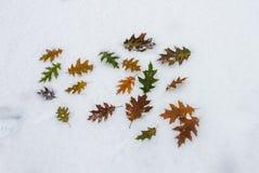 Outono atrasado Imagens de Stock Royalty Free