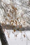 Outono atrasado Fotos de Stock