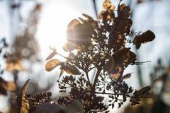 Outono atrasado fotografia de stock royalty free