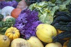 outono atrasado dos vegetais do inverno em um jardim vegetal Reino Unido Fotos de Stock