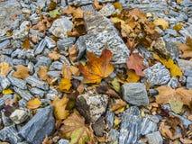 Outono atrasado Folhas brilhantes na superfície rochosa imagens de stock