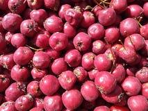 outono, baga, bio, Botânica, crataegus, flora, alimento, fruto, frutos, saúde, saudável, macro, medicina, natural, natureza, orgâ foto de stock