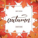 outono Bandeira com quadro das folhas de bordo e rotulação na moda da escova do outono Cartão sazonal da venda da queda Imagem de Stock Royalty Free