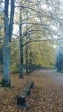 Outono bonito Imagens de Stock