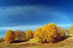 Outono bonito Fotos de Stock Royalty Free