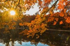 outono bonito de Japão com nascer do sol no ike da lagoa de Kumoba ou do Kumoba de Karuizawa, Nagano Japão imagens de stock
