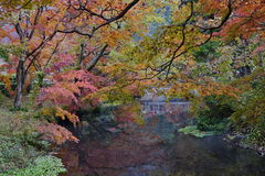 outono bonito do panorama no lago Kinrin Fotografia de Stock Royalty Free