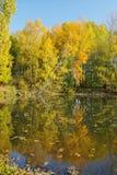 outono bonito em outubro foto de stock royalty free