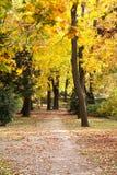 Outono bonito no parque Fotografia de Stock