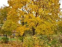 outono Bordo obscuro com folhas douradas Imagem de Stock Royalty Free