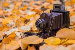 outono, câmera do vintage, folhas amarelas, idade avançada fotos de stock