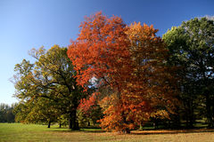 Outono cénico Imagens de Stock Royalty Free