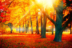 outono Cena da natureza da queda Parque outonal fotografia de stock royalty free