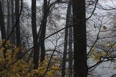 Outono chuvoso Fotos de Stock Royalty Free