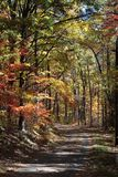 Outono colorido Foto de Stock Royalty Free