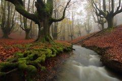 Outono colorido Fotos de Stock Royalty Free