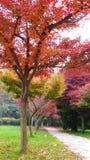 Outono colorido Imagens de Stock Royalty Free