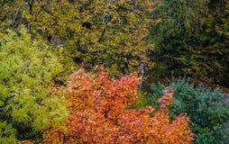 Outono colorido no parque Perspectiva criativa Fotografia de Stock Royalty Free