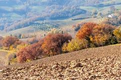 outono com as árvores amarelas e alaranjadas no monte do Marche na região de Montefeltro foto de stock royalty free