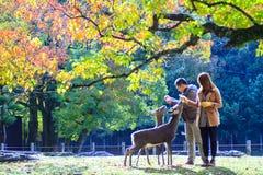 outono com cor bonita do bordo em Nara Park, Japão Fotografia de Stock Royalty Free