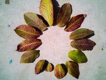 outono com folhas fotos de stock royalty free