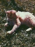 outono com gatos fotografia de stock royalty free