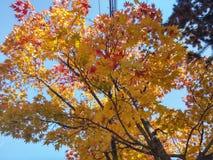 outono coreano Imagem de Stock Royalty Free