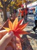 outono coreano Foto de Stock Royalty Free