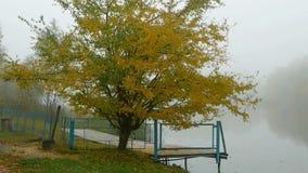 outono da água da floresta filme