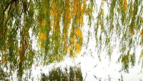 outono da água da floresta vídeos de arquivo