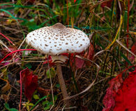 outono da floresta do cogumelo fotos de stock royalty free