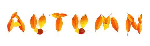 Outono da palavra Fotos de Stock Royalty Free
