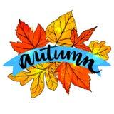 outono da palavra da caligrafia escrito à mão na laranja Fotografia de Stock Royalty Free