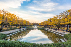 outono das árvores da nogueira-do-Japão imagens de stock royalty free
