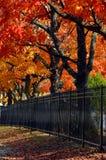 Outono de Arkansas em Rogers imagem de stock