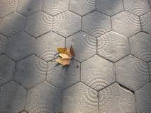 outono de Barcelona no passeio clássico da telha fotos de stock royalty free