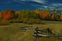 outono 1 de Colorado Foto de Stock Royalty Free