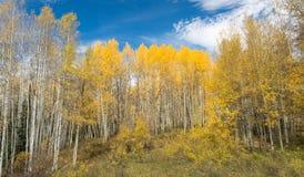 outono de Colorado Fotos de Stock Royalty Free