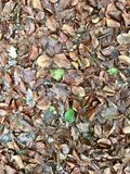 outono de Leeves Imagens de Stock