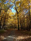 outono de Michigan Imagem de Stock Royalty Free